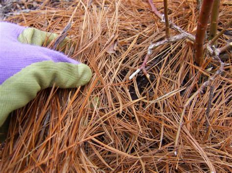 how to choose mulch for your landscape