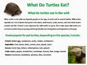 what do turtles eat 171 4best of