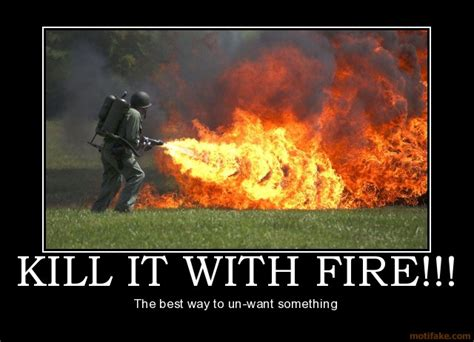 Kill It With Fire Meme - world wildness web kill it with fire