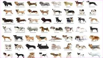 names of small dog breeds and pictures simple image gallery
