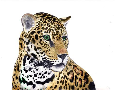 what color is a jaguar jaguar in color by mikebontoft on deviantart