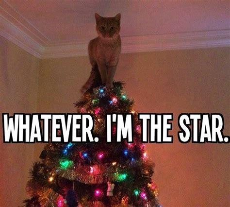 christmas tree star cat meme     giggle pinterest christmas trees kitty