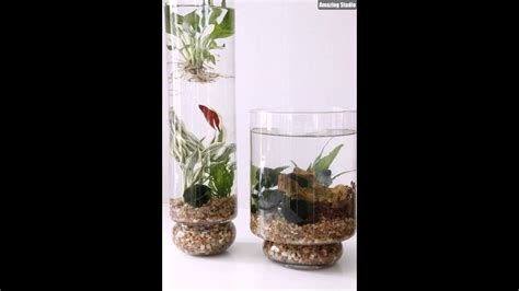 diy indoor water garden  fish youtube