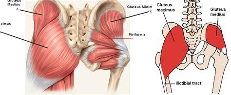 muscoli sedere come sviluppare i glutei project invictus project invictus