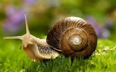 un caracol a snail 8426350941 snail interesting mollusk wander lord