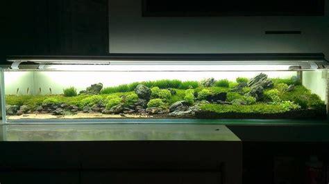 aquarium design group llc 31 best images about freshwater aquarium on pinterest