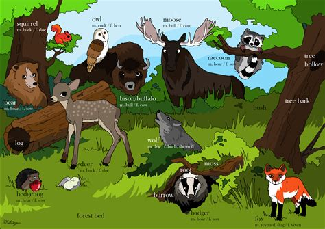 Plants And The Environment in the forest environment animals plants vocabulary