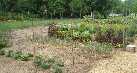 Fieldstone Gardens by Fieldstone Organic Farm Gardens 2008 Season