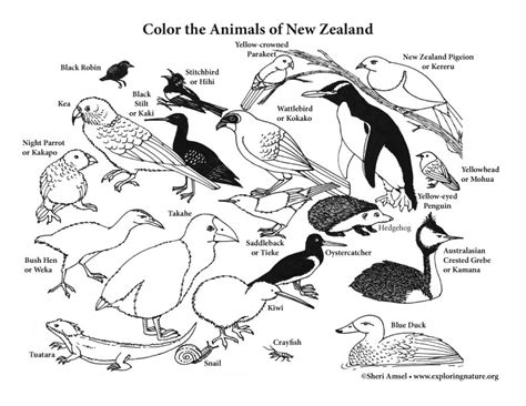 7 best images of animal habitats coloring printables