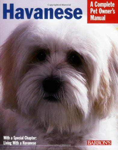 all about havanese all about havanese dogs behaviours characteristics and more havanese breeders