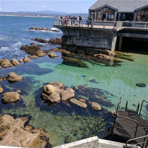 California State Monterey Bay Mba Ranking by Monterey Bay Aquarium 7773 Photos 3178 Reviews