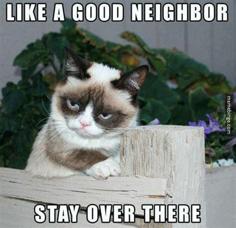 Good Meme Cat - grumpy cat s twist on the state farm motto memebinge com