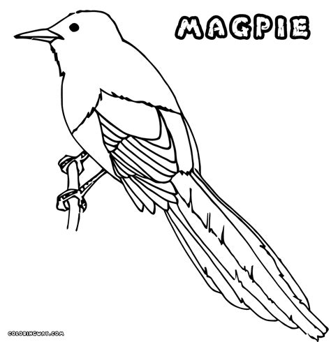 Magpie Coloring Pages Coloring Pages To Download And Print Coloring Pages About