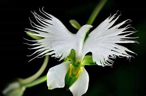 imagenes de rosas unicas en el mundo encuentra aqu 237 las flores bellas del mundo para descargar