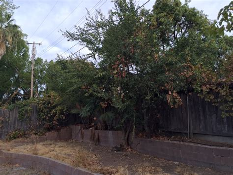 Backyard Clearing Tree Removals And Brush Clearing 183 Sacramento S Best Tree Care