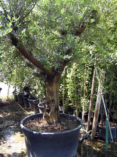 Charmant Grande Jardiniere Pas Chere #2: Olivier40ans_gm.jpg