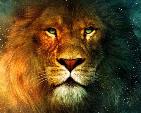 google images lion lion recherche google tatouage pinterest images d