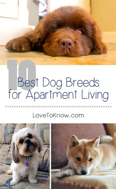 Appartment Dogs by Best 25 Apartment Ideas On Apartment