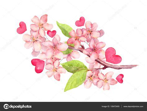 fiori di ciliegia ramo di fiori di melo ciliegia fiore illustrazione