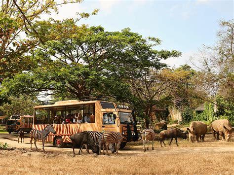 bali safari and marine park bali activity 15 bali safari marine park tickets wandernesia