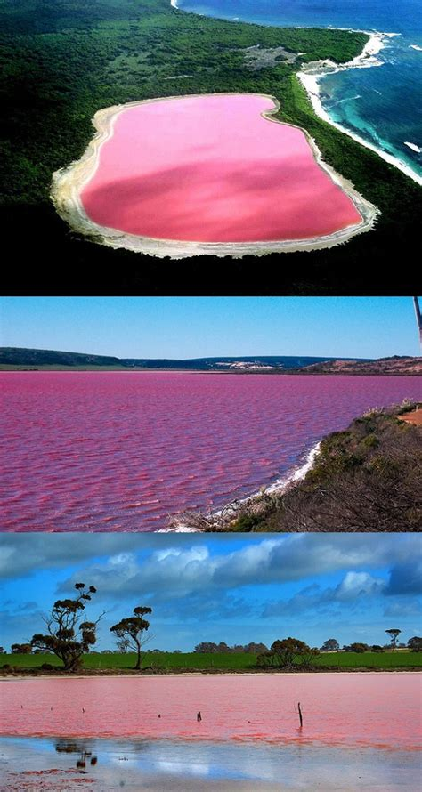 pink lake hillier lake western australia the worlds only naturally