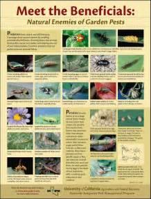 pest 13 enemies of garden pests