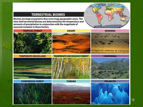 exle of ecosystem terrestrial ecosystem exles www pixshark images