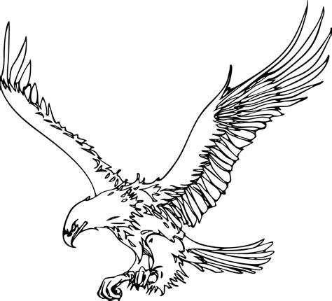 Flying Eagle Outline eagle outline clipart best