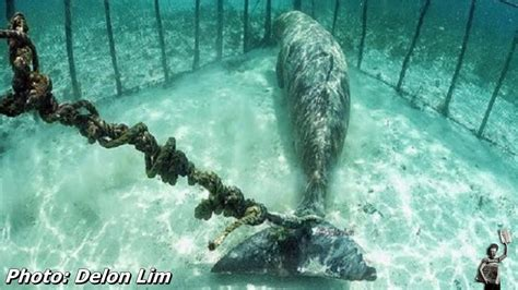 trapped a s search for the in the of unspeakable tragedy books shocking photos divers shocked to find animals trapped in