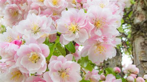 imagenes flores jasmin lindas banco de im 225 genes para ver disfrutar y compartir