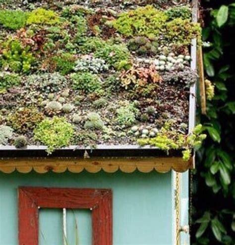 giardini verdi il sedum e le altre piante grasse per i tetti verdi