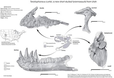 Bdcc Coin Digital paleo dinosaur illustration on behance