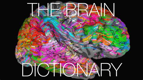 for the brain the brain dictionary