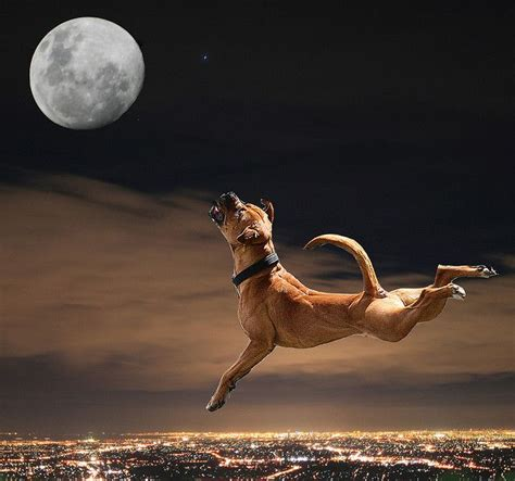 barking at the moon howling at the moon the moon and i