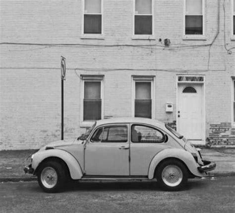 beetle bug  tumblr