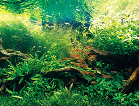nature aquarium  takashi amano