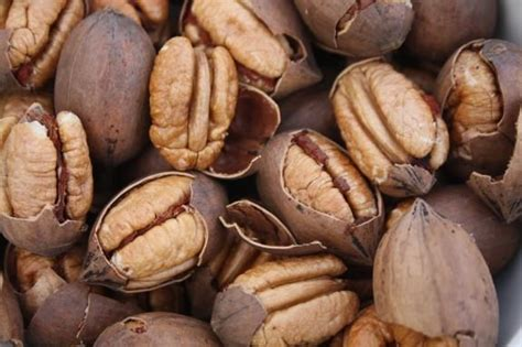 The Rise of Paper Shell Pecans ? Royalty Pecan Farms