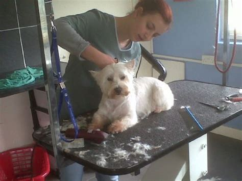 in the dog house grooming in the dog house grooming parlour dog grooming company in frton cotterell