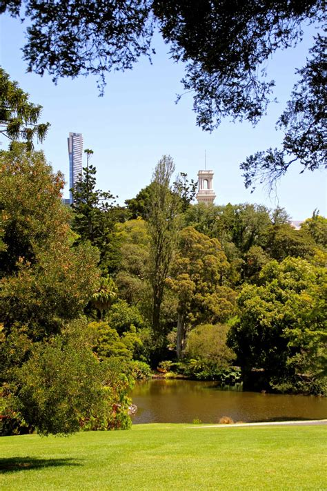 Melbourne Botanical Gardens The 5 Best Photography Locations In Melbourne Melbourne