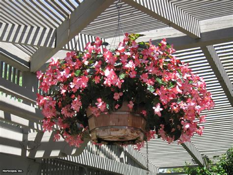 the best flowers for container gardens hgtv