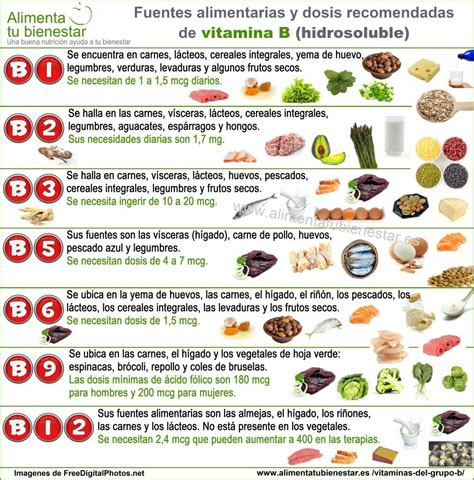 proteinas e vitaminas las vitaminas grupo b beneficios y alimentarias