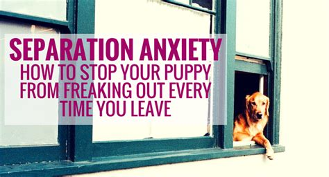 dog barks when i leave how to stop your dog barking when when your dog barks every time you leave home separation