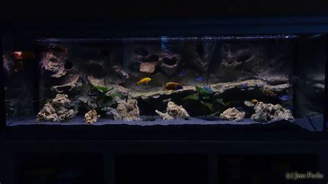 jbl aquarium beleuchtung aquarium 375 liter cichliden becken