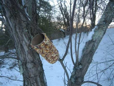 Bird Feeder With Peanut Butter make bird feeders using toilet paper rolls