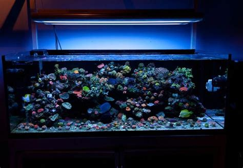 aquarium diy projects led aquarium light project aquarium led light application