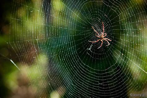 web on spider web luke casey photography