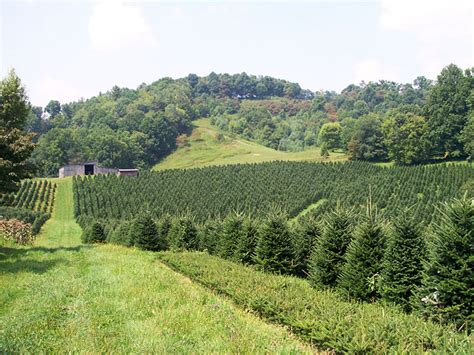 100 green christmas tree farm in boone nc wccta