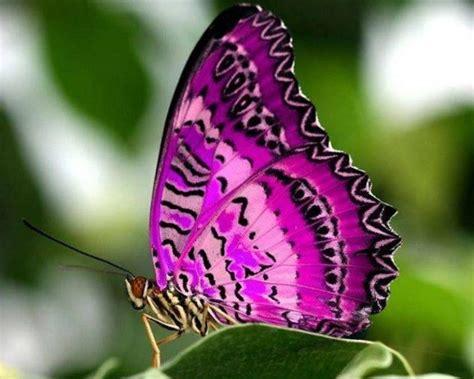 imagenes sobre mariposas hay algo sobre las mariposas que la mayor 237 a de personas
