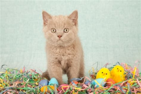 cat easter wallpaper happy easter cats animals background wallpapers on