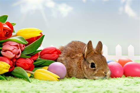 easter in christian easter backgrounds in